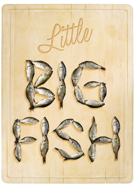 fish-font