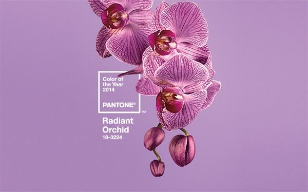 Màu của năm 2014 - Màu tím Orchid - Pantone 18-3224